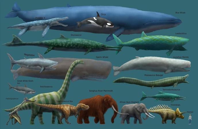blue whale compare