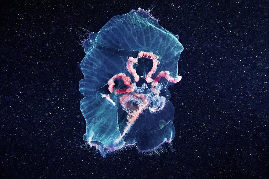 jellyfish10
