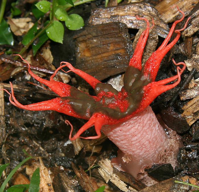 mushroom5